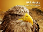 Bald Eagle Animal PowerPoint Templates And PowerPoint Backgrounds 0411