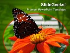 Butterfly On Flower Animal PowerPoint Template 0810