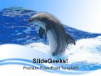 Dolphin Animals PowerPoint Template 0910