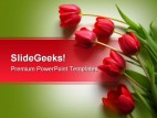 Red Tulips Nature PowerPoint Template 0610