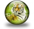 Amur Tiger PowerPoint Icon C