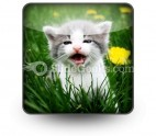 Baby Cat PowerPoint Icon S