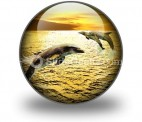 Dolphins PowerPoint Icon C