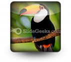 Toucan PowerPoint Icon S