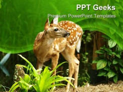 Deer Animals PowerPoint Templates And PowerPoint Backgrounds 0411