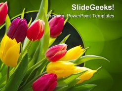 Tulips Beauty PowerPoint Template 0810
