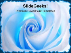 White Rose Beauty PowerPoint Template 0610