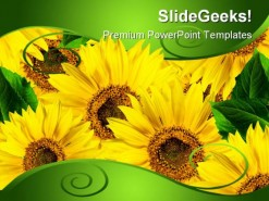 Yellow Flowers Beauty PowerPoint Background And Template 1210