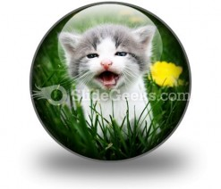 Baby Cat PowerPoint Icon C