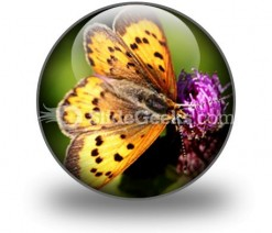 Butterfly PowerPoint Icon C