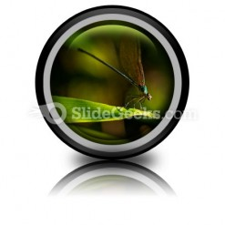Insect PowerPoint Icon Cc