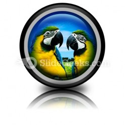 Parrots In Love PowerPoint Icon Cc