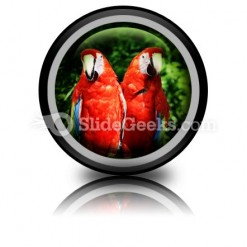 Red Parrots PowerPoint Icon Cc
