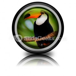 Toucan PowerPoint Icon Cc