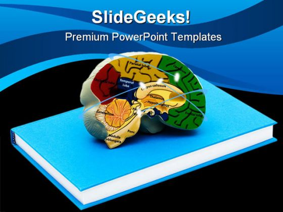Brain Science PowerPoint Backgrounds And Templates 1210 – Brain Powerpoint Template