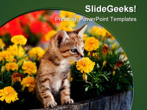 Cat Animal PowerPoint Template 0810
