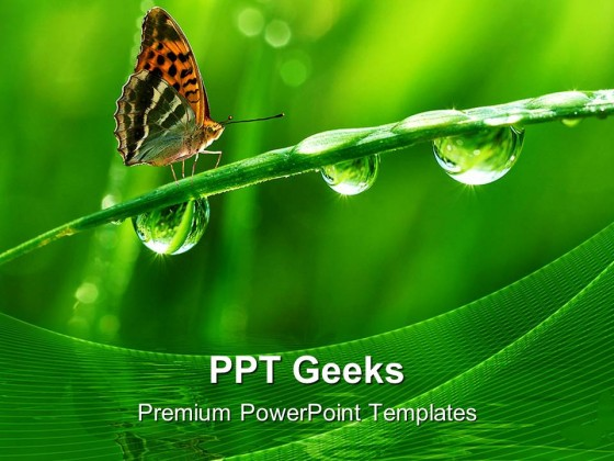 Dew And Butterfly Nature Powerpoint Templates And Powerpoint