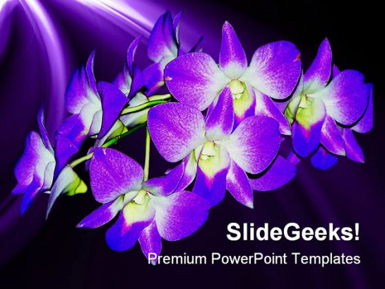 Purple Orchid Nature PowerPoint Template 0610