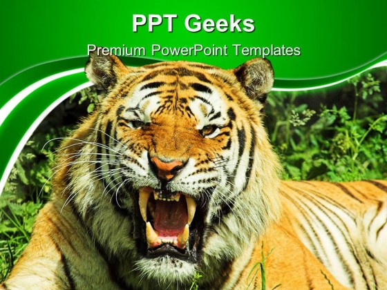 tiger snarl animals powerpoint templates and powerpoint, Modern powerpoint