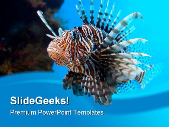 Turkey Fish Animal Powerpoint Backgrounds And Templates 1210