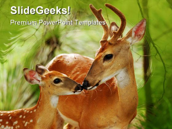 White Tail Buck Animal PowerPoint Template 0810