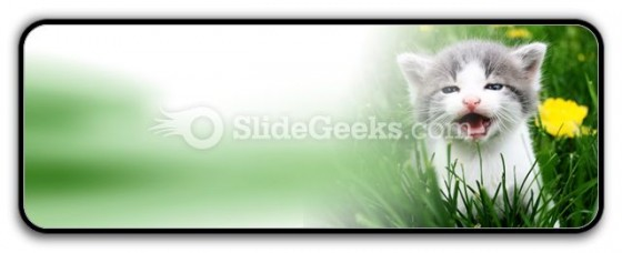 Baby Cat PowerPoint Icon R