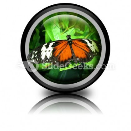 Big Butterfly PowerPoint Icon Cc