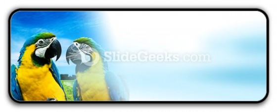 Parrots In Love PowerPoint Icon R