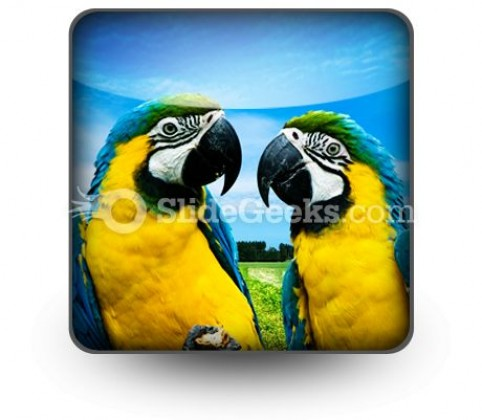 Parrots In Love PowerPoint Icon S